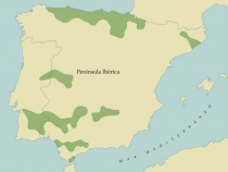 Mapa Vitis Silvestris na Peninsula Iberica