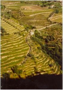 viticultura-em-socalcos
