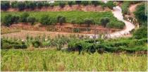 viticultura-de-tavora-varoso_2