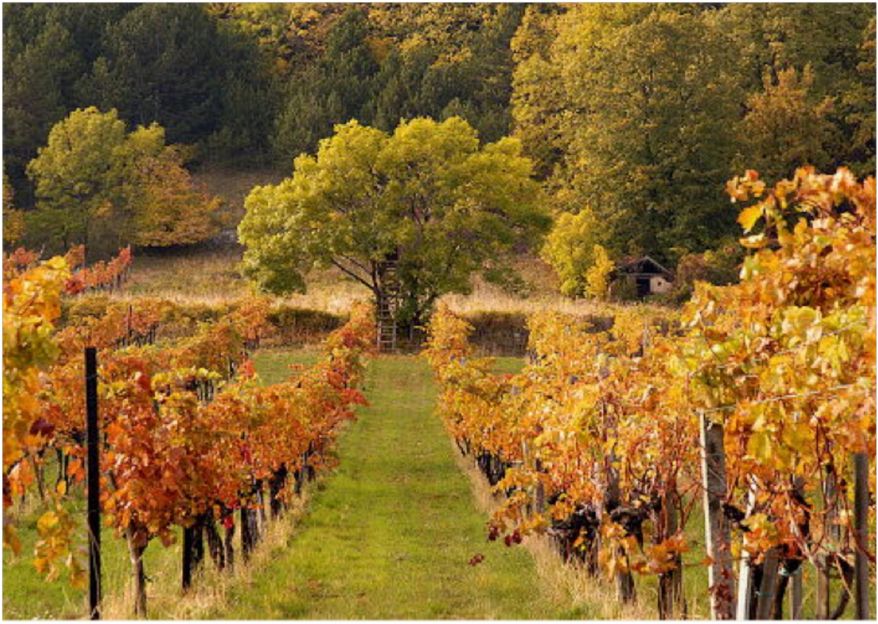 Transmontano - Vine to Wine CircleVine to Wine Circle