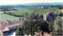 quinta-tipica-do-vinho-verde