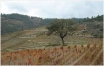 viticultura-de-tavora-varoso_1