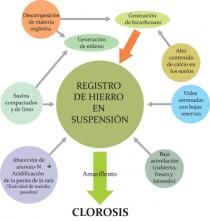 Abb 3 Darstellung verschiedener Einflussfaktoren welche Chlorose